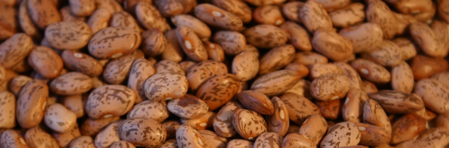 Food Storage-Beans   Super Prepared